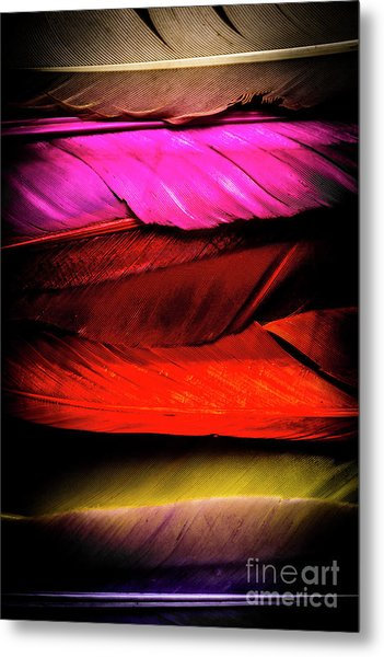 Feathers Of Rainbow Color Metal Print
