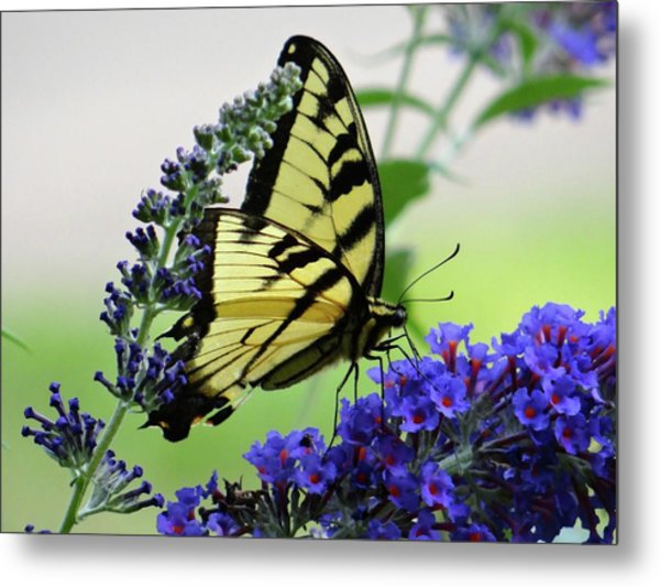 Feeding From A Nectar Plant Metal Print