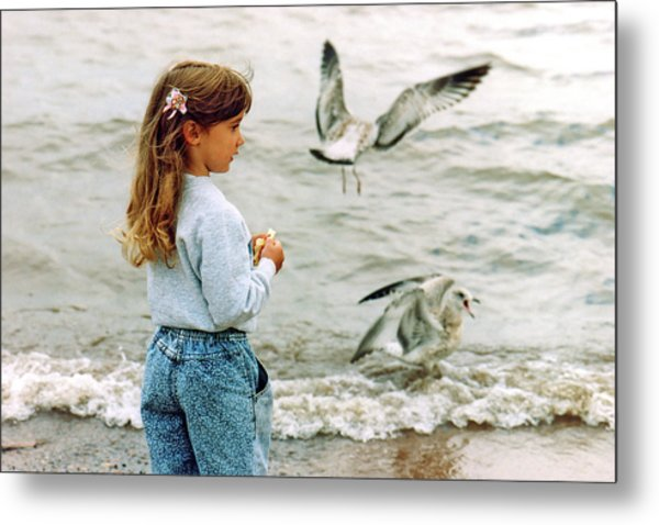 Feeding Gulls Metal Print