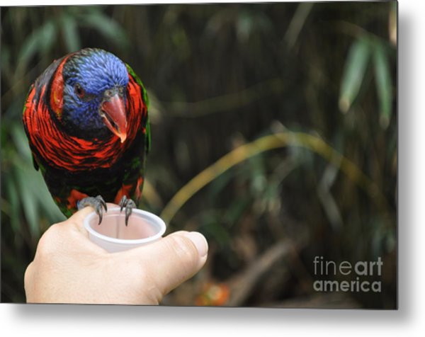 Feeding The Birds Metal Print