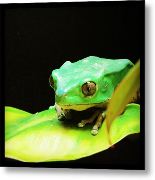 Feeling Froggy Metal Print