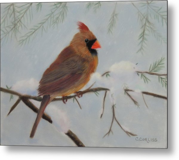 Female Cardinal Metal Print