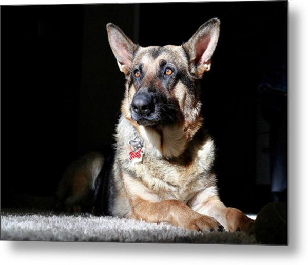 Female German Shepherd Metal Print