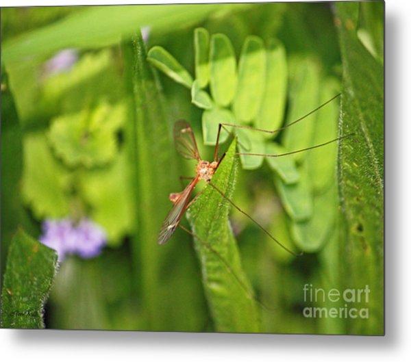 Female Mosquito Metal Print