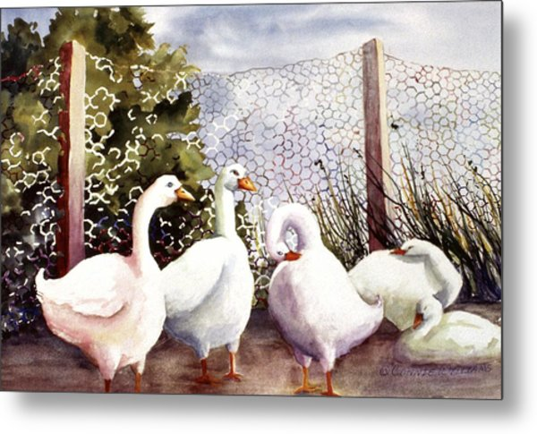 Fenced In Quackers Metal Print