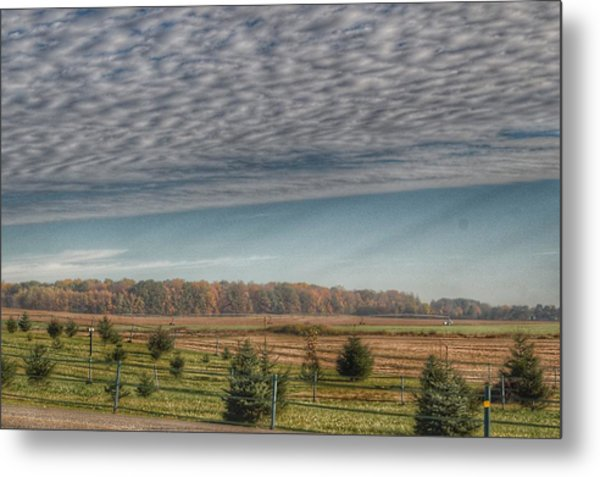 9017 - Fences, Firs And Fall Metal Print