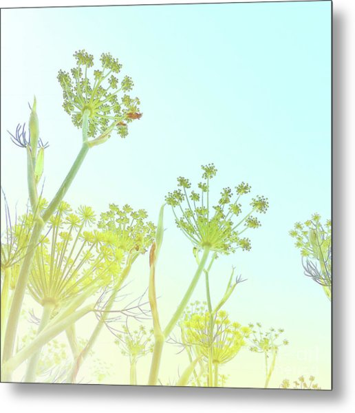 Metal Print featuring the photograph Fennel As High As An Elephant's Eye by Cindy Garber Iverson