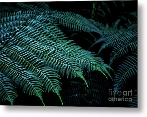 Patterns Of Nature 6 Metal Print
