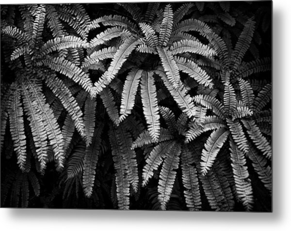 Fern And Shadow Metal Print