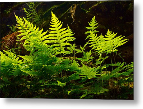 Fern Light Metal Print