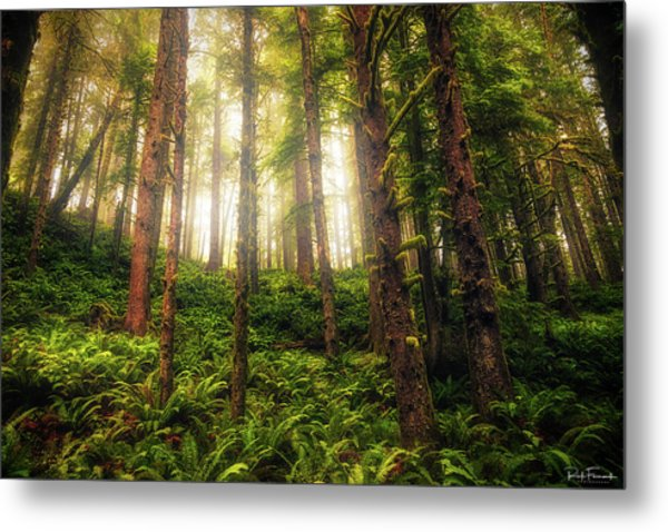 Metal Print featuring the photograph Ferngully by Rick Furmanek