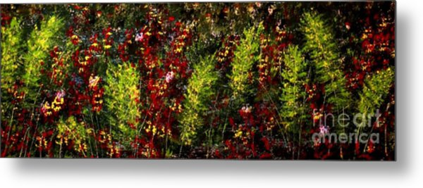 Ferns And Berries Metal Print