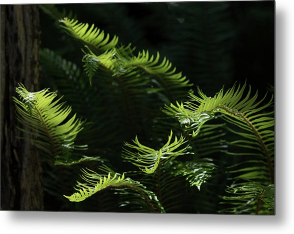 Ferns In The Forest Metal Print