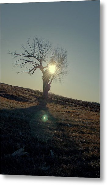 Field And Tree Metal Print