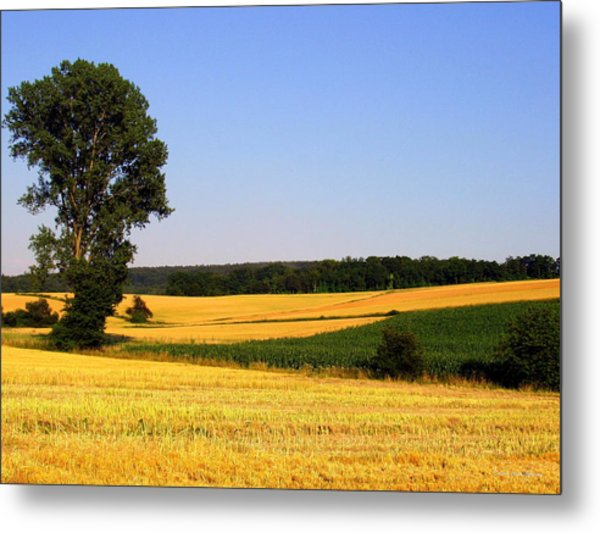 Field Flow Metal Print