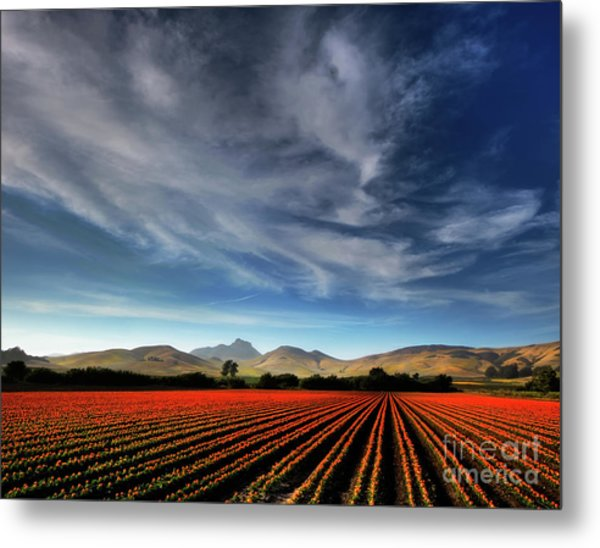 Field Of Color Metal Print