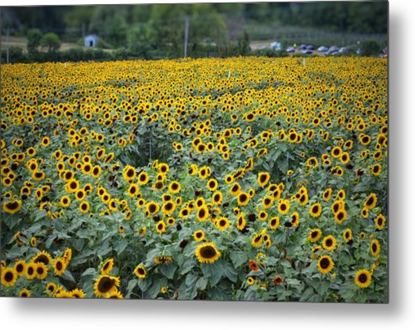 Field Of Flowers  Metal Print