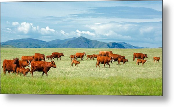 Field Of Reds Metal Print