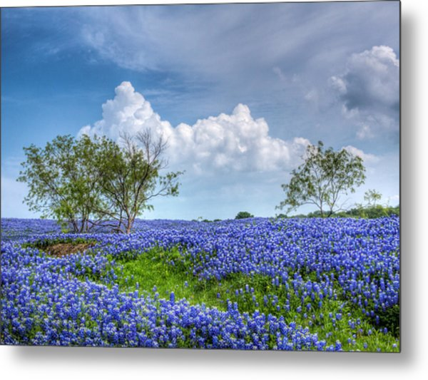 Field Of Texas Bluebonnets Metal Print