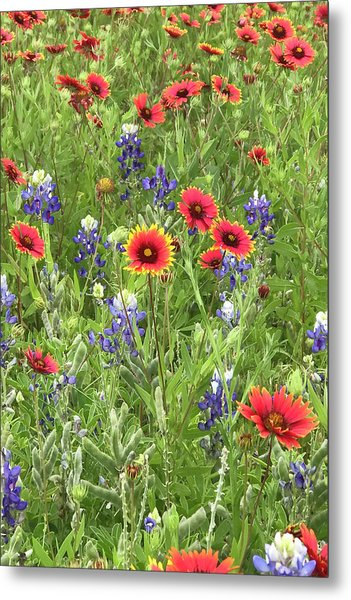 Field Of Texas Wildflowers Metal Print