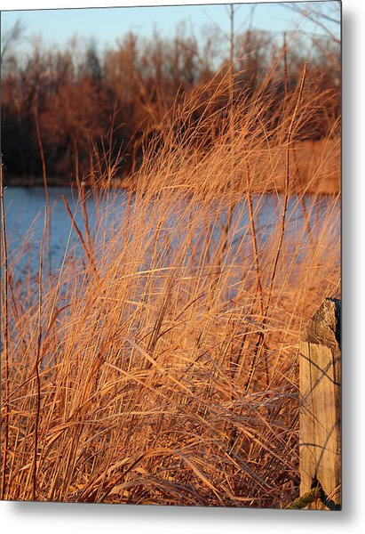 Amber Brush On The River Metal Print