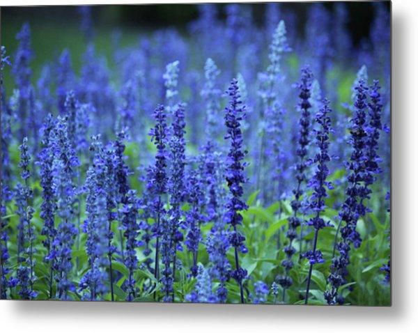 Fields Of Blue Metal Print