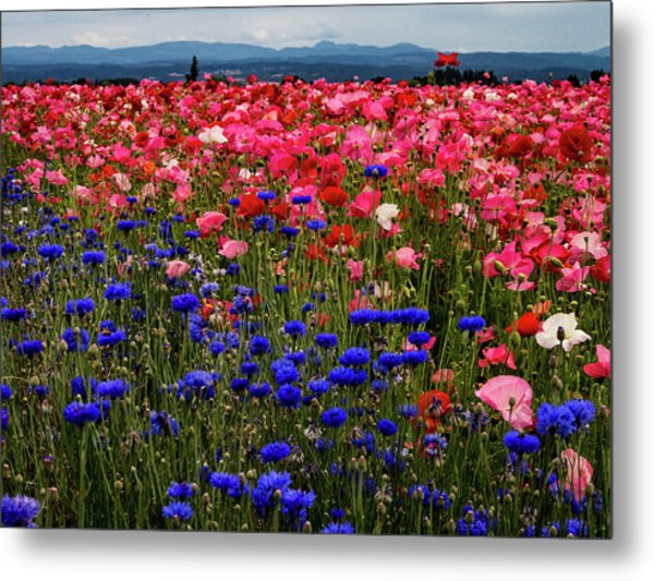 Fields Of Flowers Metal Print