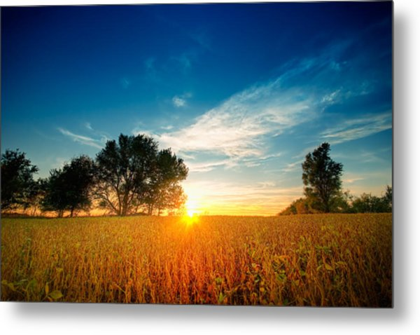 Fields Of Gold Metal Print by Ryan Heffron
