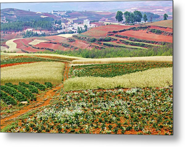 Fields Of The Redlands-1 Metal Print