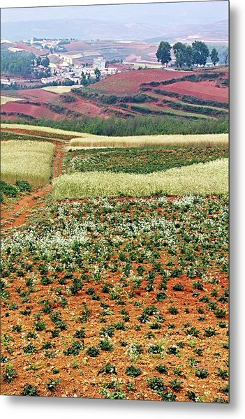 Fields Of The Redlands - 2 Metal Print
