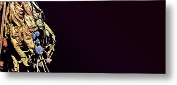 Metal Print featuring the photograph fig by Artistic Panda