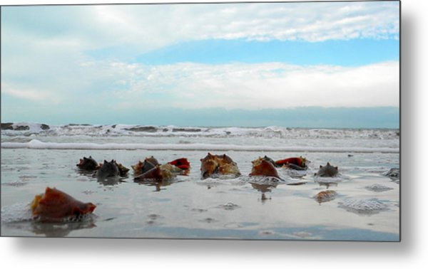 Fighting Conches Metal Print