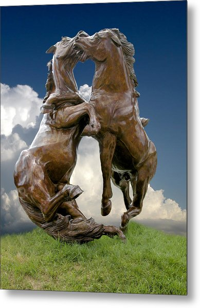 Fighting Stallions Metal Print