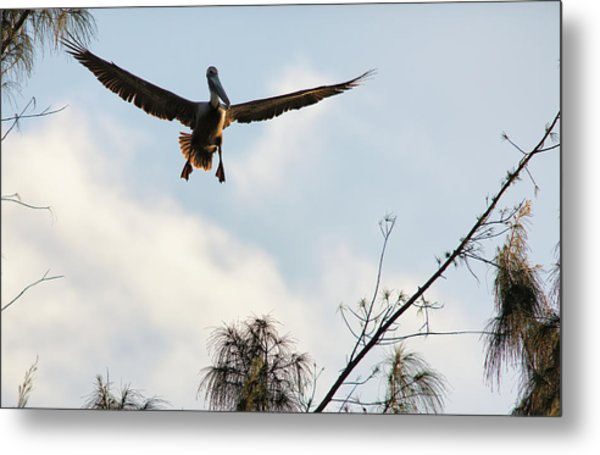 Metal Print featuring the photograph Final Approach by David Buhler