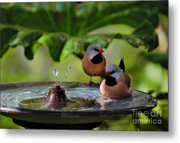 Finch Bath  Metal Print
