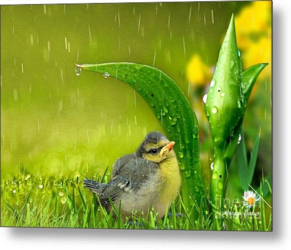 Finding Shelter Metal Print