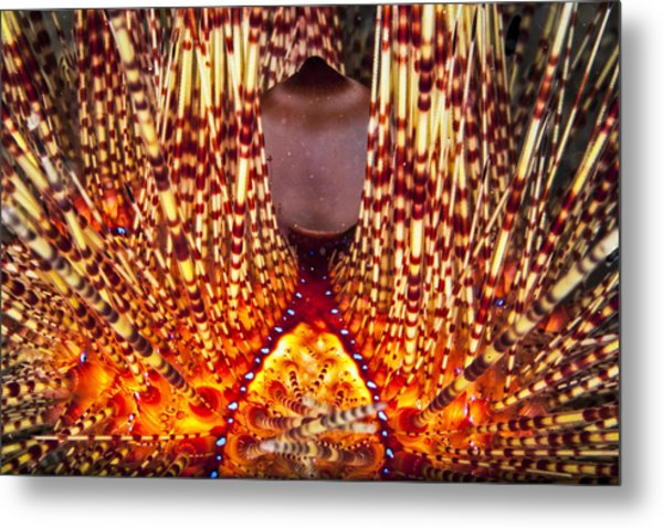 Fire Beneath The Waves Metal Print