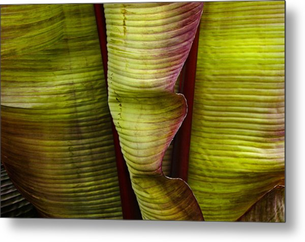 Fire Palm Iv Metal Print