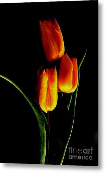 Fire Tulips Metal Print by Valia Bradshaw