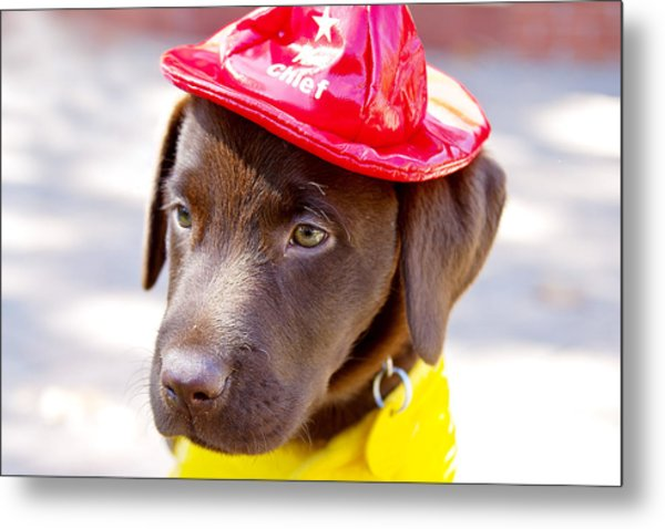Firefighter Pup Metal Print