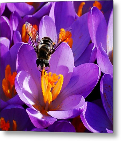 First Bee Of Spring Metal Print