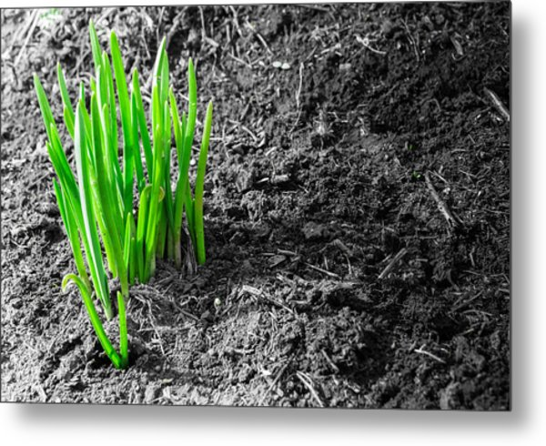 First Green Shoots Of Spring And Dirt Metal Print