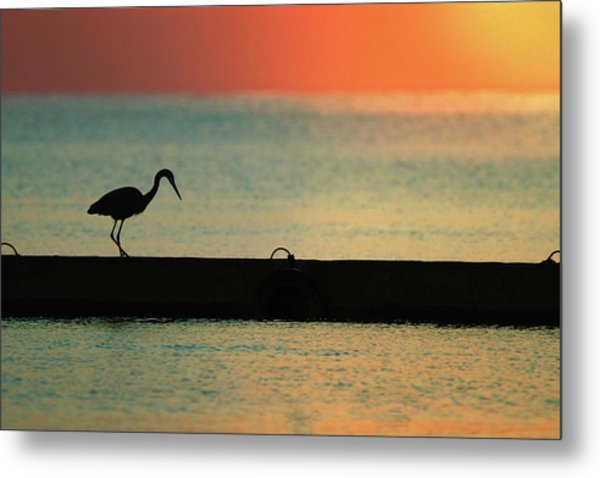 First On The Jetty Metal Print