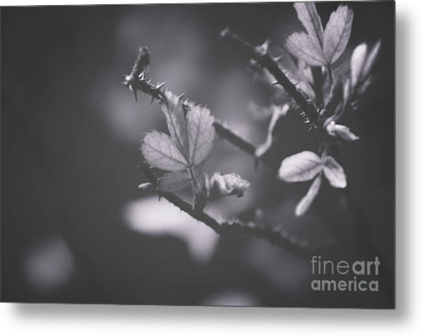 First Signs Of Spring -georgia Metal Print