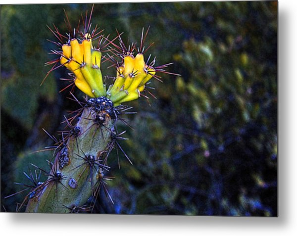 First Signs Of Spring On The Sonoran Desert Metal Print