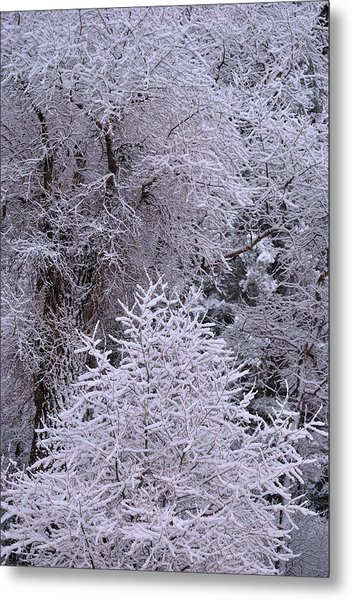 First Snow I Metal Print