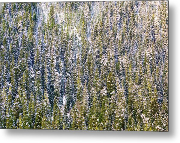 First Snow On Trees Metal Print