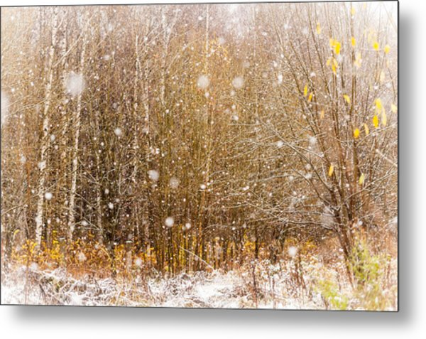 First Snow. Snow Flakes I Metal Print