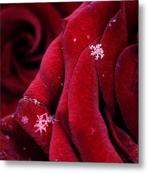 First Snowflakes With Love Metal Print by Floriana Barbu