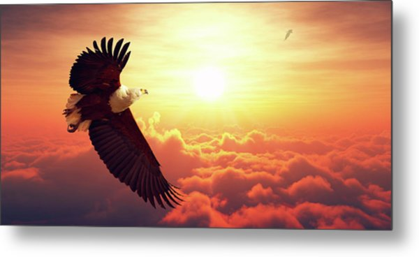 Fish Eagle Flying Above Clouds Metal Print